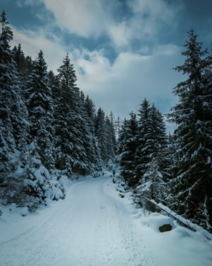 Marcher dans la forêt en hiver , nature et marche